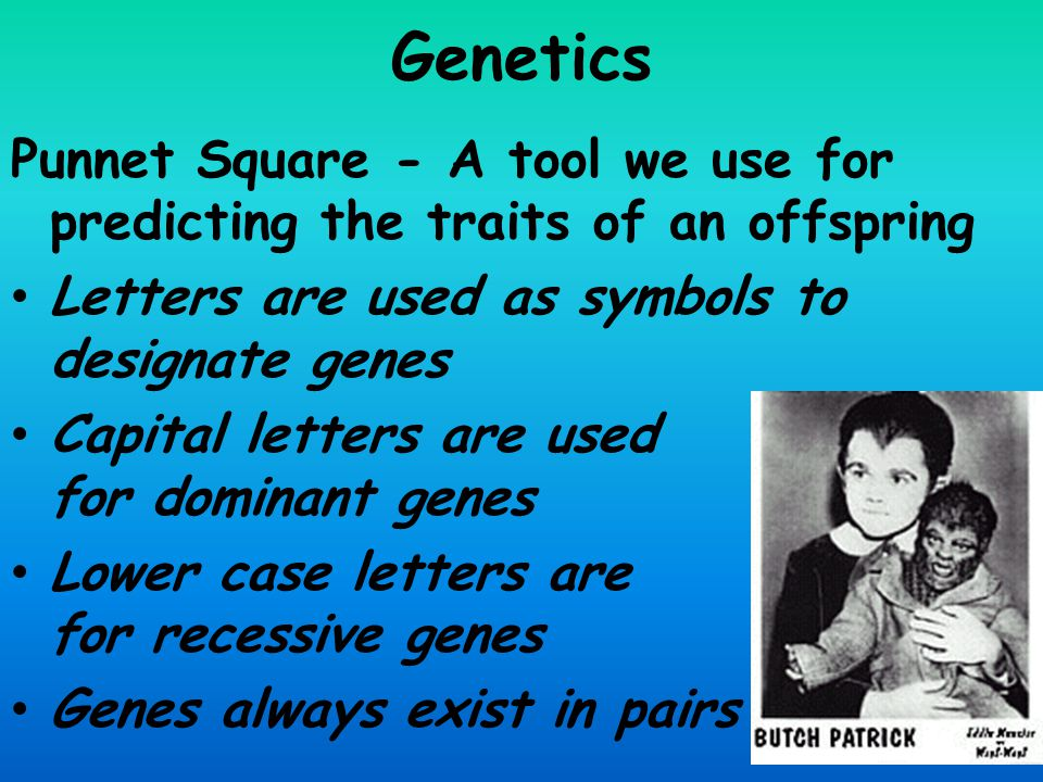 Genetics Punnet Square - A tool we use for predicting the traits of an offspring. Letters are used as symbols to designate genes.