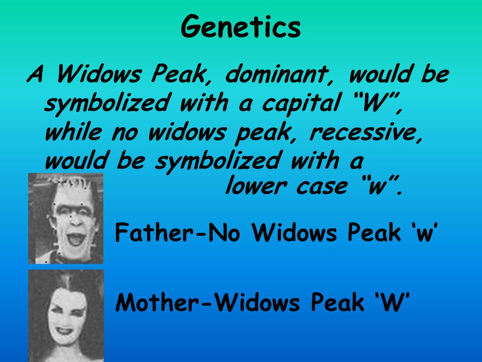 Genetics A Widows Peak, dominant, would be symbolized with a capital W , while no widows peak, recessive, would be symbolized with a.