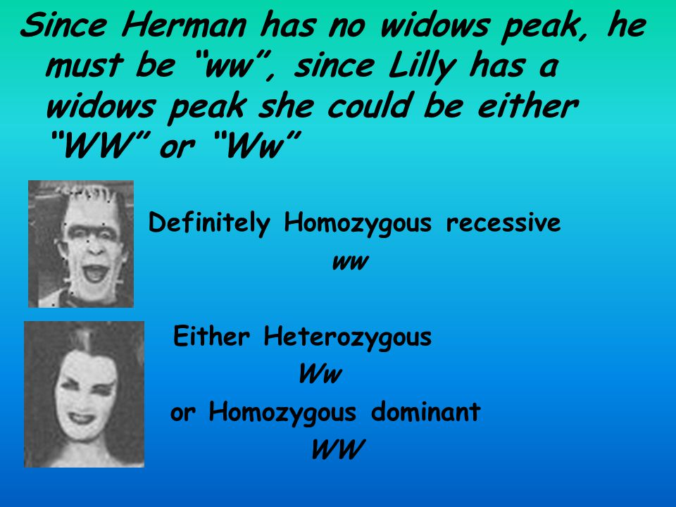 Since Herman has no widows peak, he must be ww , since Lilly has a widows peak she could be either WW or Ww