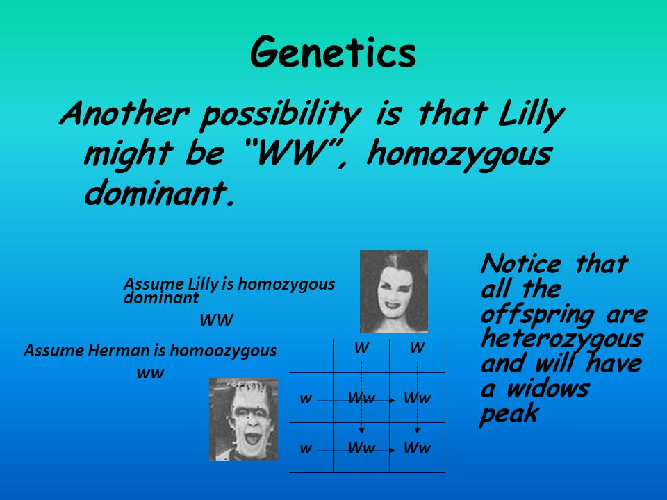 Genetics Another possibility is that Lilly might be WW , homozygous dominant.