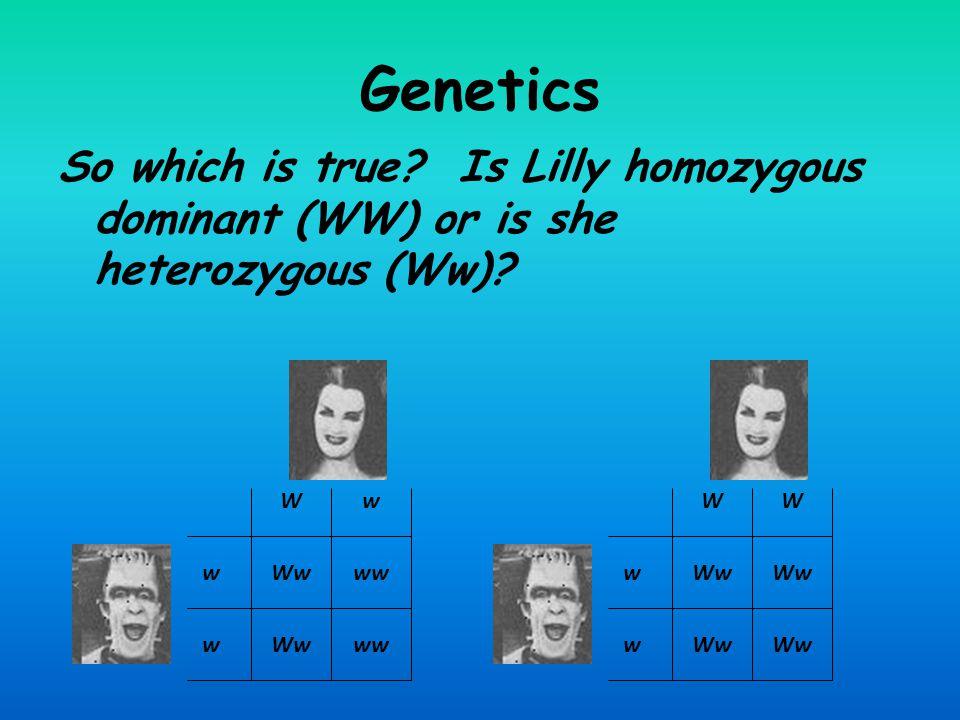 Genetics So which is true Is Lilly homozygous dominant (WW) or is she heterozygous (Ww) W. w. W.