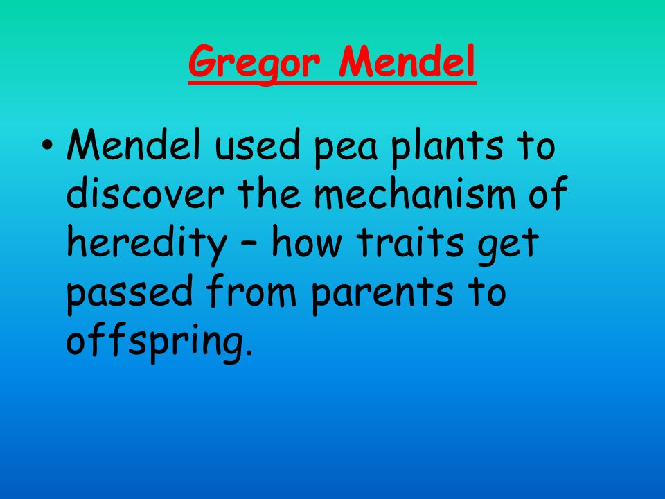 Gregor Mendel Mendel used pea plants to discover the mechanism of heredity – how traits get passed from parents to offspring.