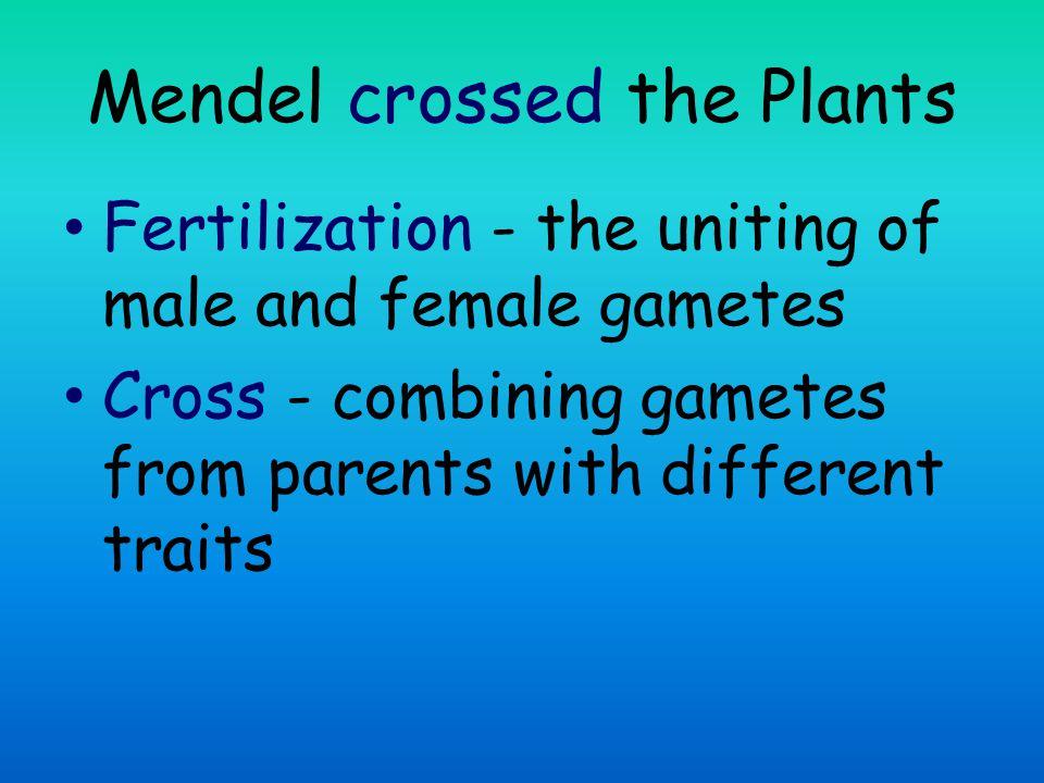 Mendel crossed the Plants