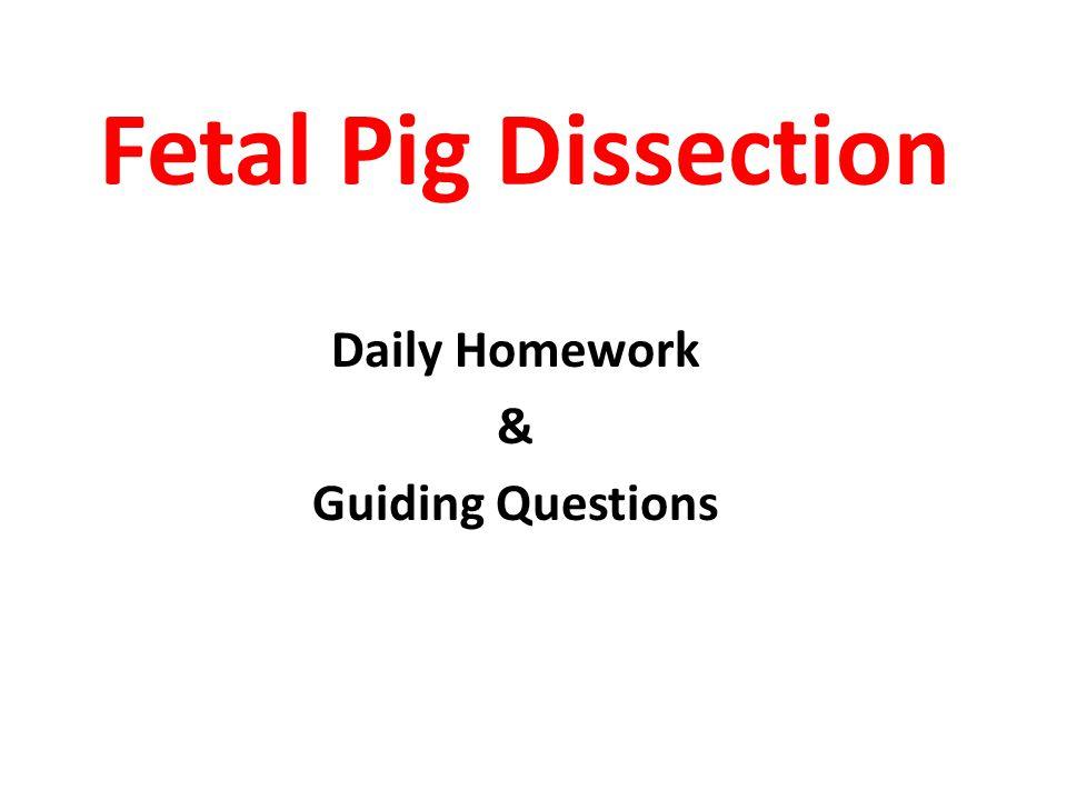 Daily Homework & Guiding Questions