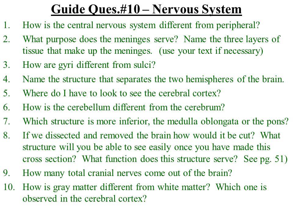 Guide Ques.#10 – Nervous System