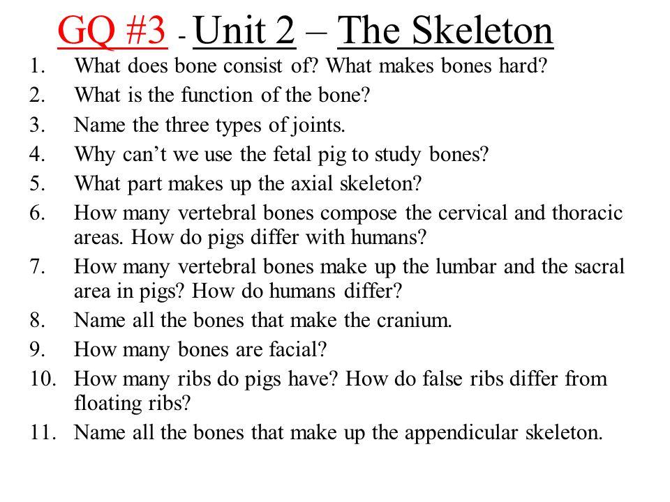 GQ #3 - Unit 2 – The Skeleton