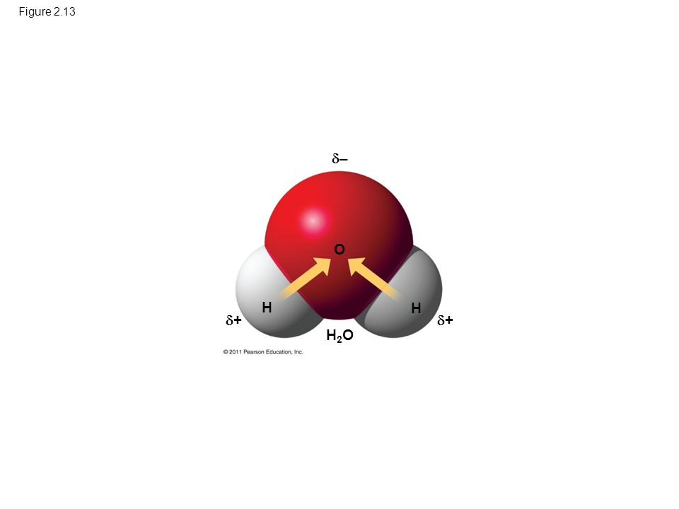 Figure 2.13 – O H H + + Figure 2.13 Polar covalent bonds in a water molecule. H2O 27