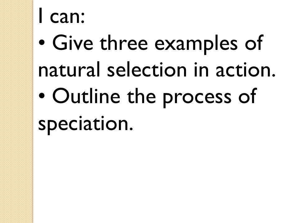 I can: • Give three examples of natural selection in action. • Outline the process of speciation.