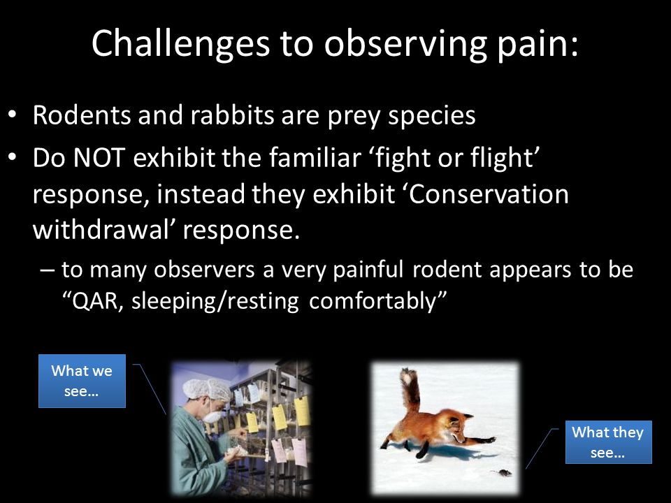 Challenges to observing pain: