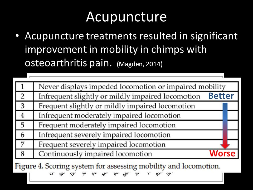Acupuncture Acupuncture treatments resulted in significant improvement in mobility in chimps with osteoarthritis pain. (Magden, 2014)
