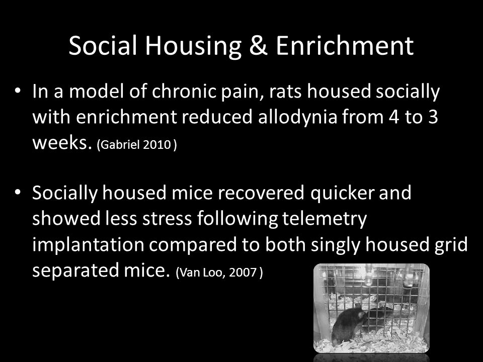 Social Housing & Enrichment