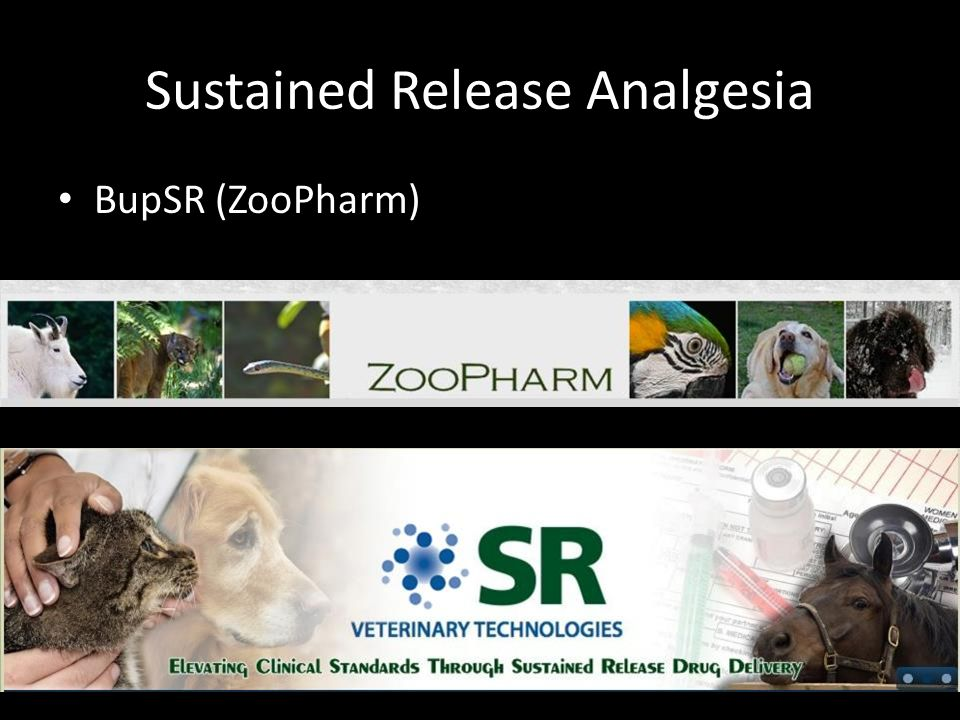 Sustained Release Analgesia