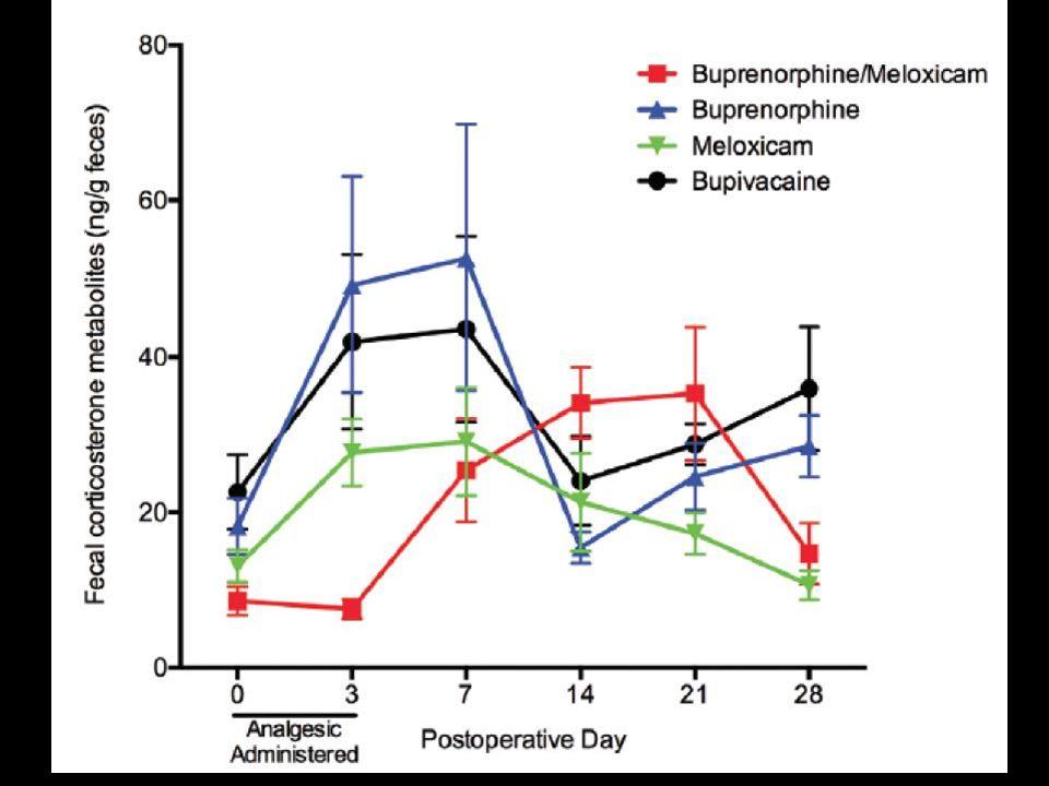 Buprenorphine & Meloxicam