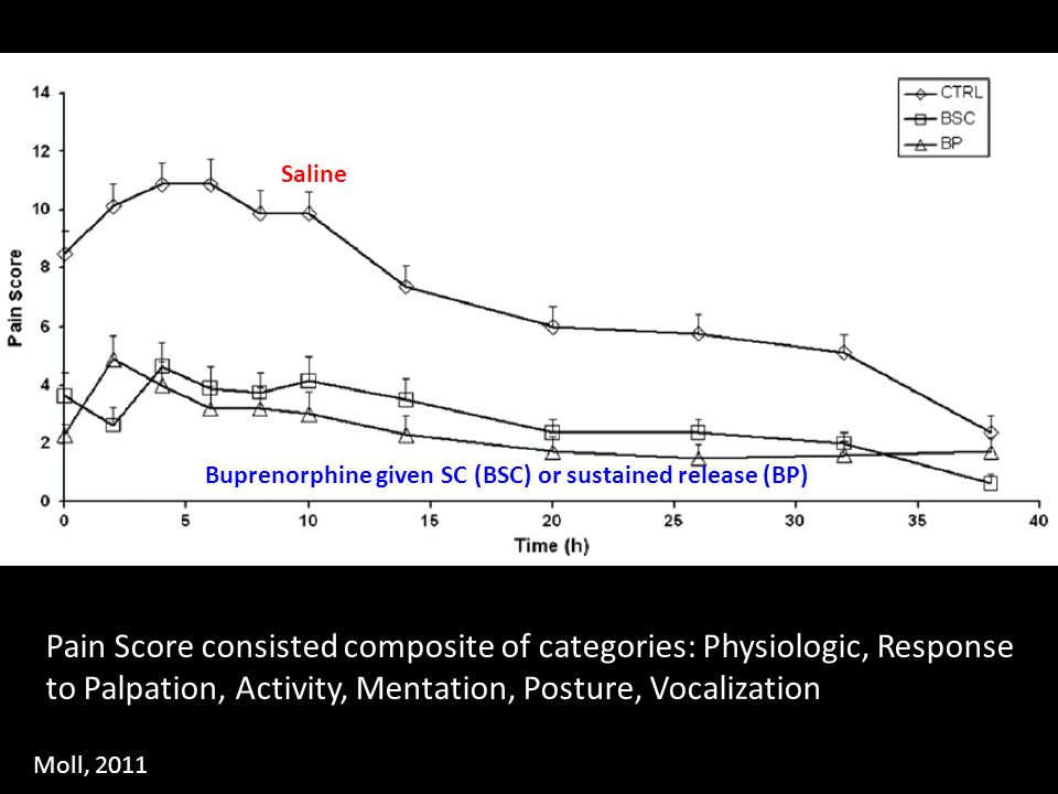 Saline Buprenorphine given SC (BSC) or sustained release (BP)
