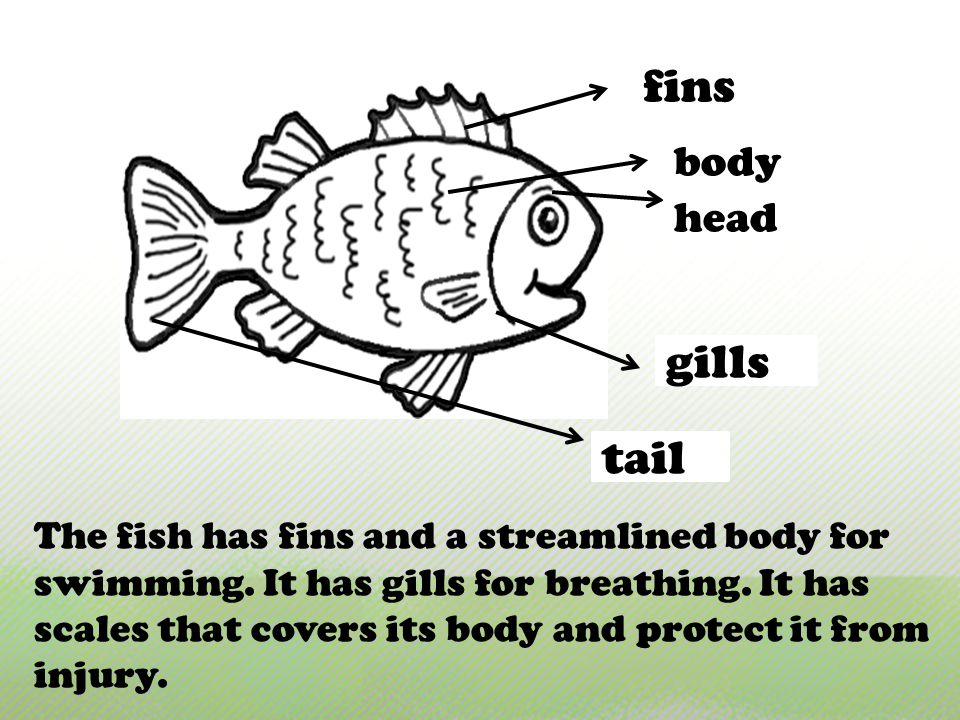 fins gills tail body head