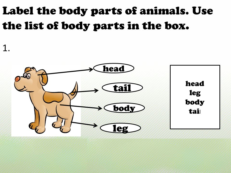Label the body parts of animals. Use the list of body parts in the box.