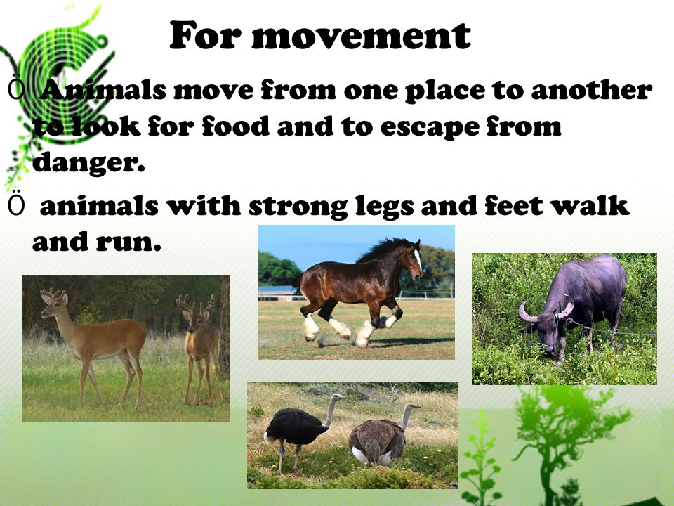 For movement Animals move from one place to another to look for food and to escape from danger.