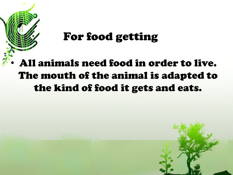 All animals need food in order to live