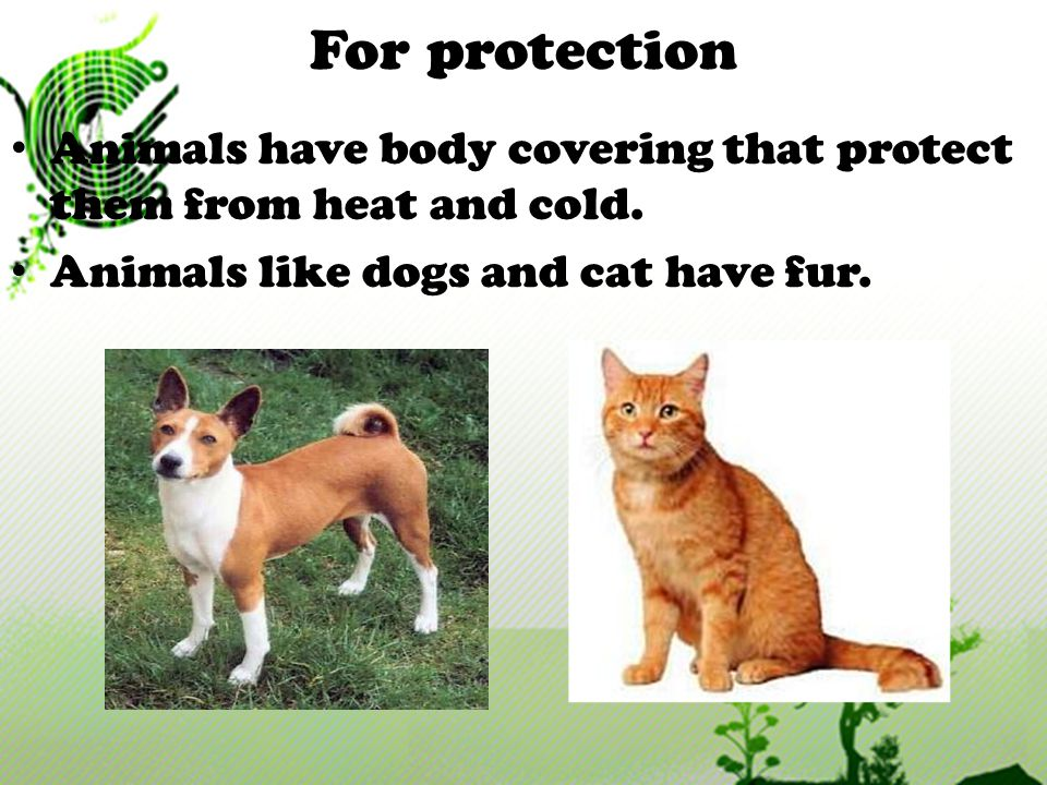 For protection Animals have body covering that protect them from heat and cold.
