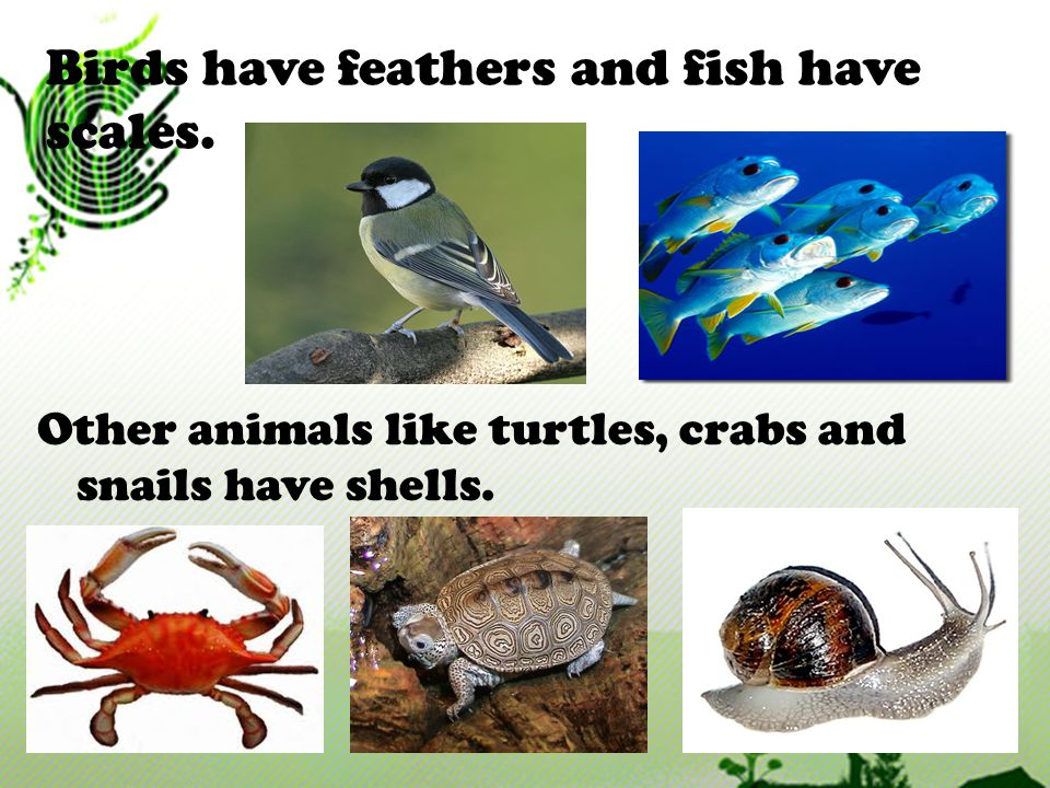 Birds have feathers and fish have scales.