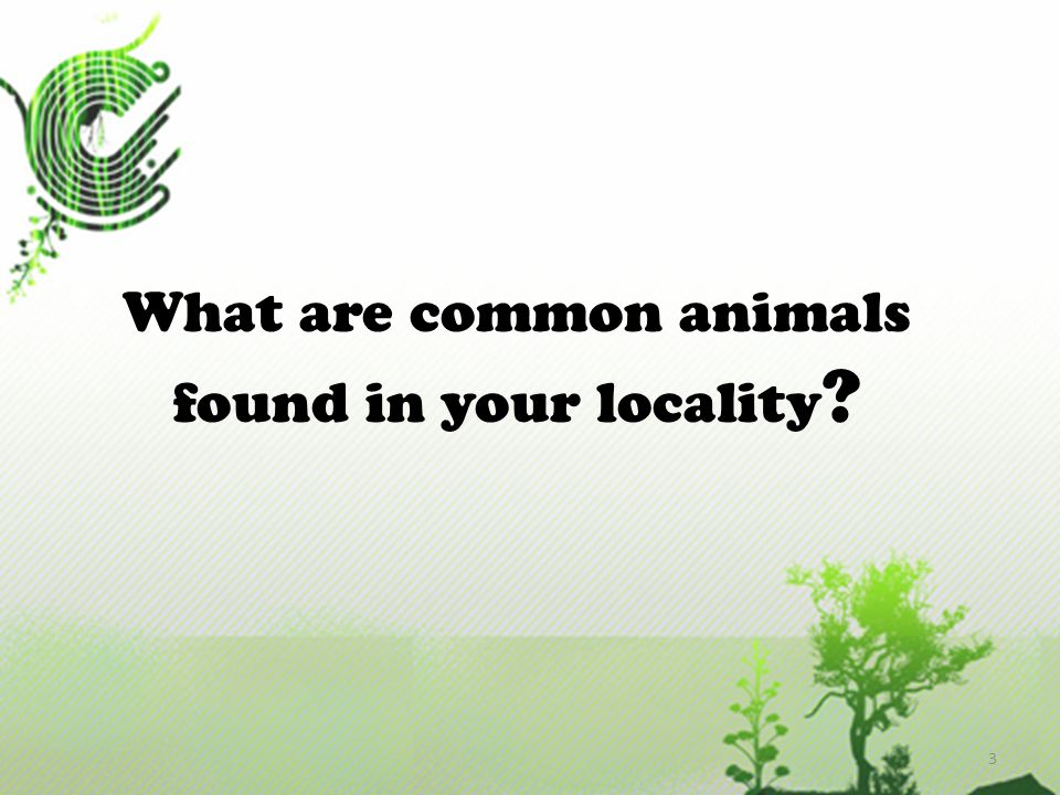 What are common animals found in your locality