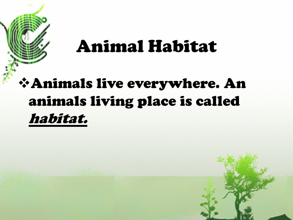 Animal Habitat Animals live everywhere. An animals living place is called habitat.