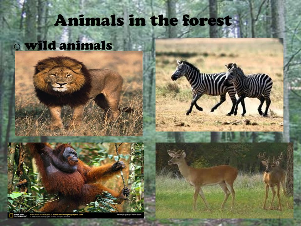 Animals in the forest wild animals