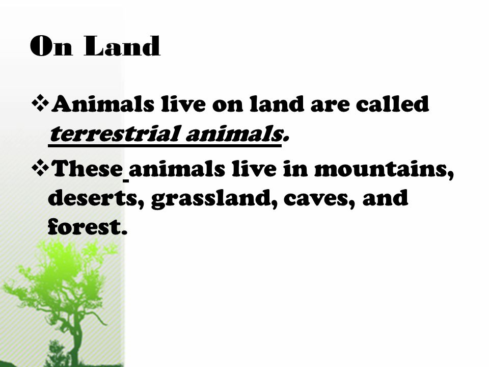 On Land Animals live on land are called terrestrial animals.