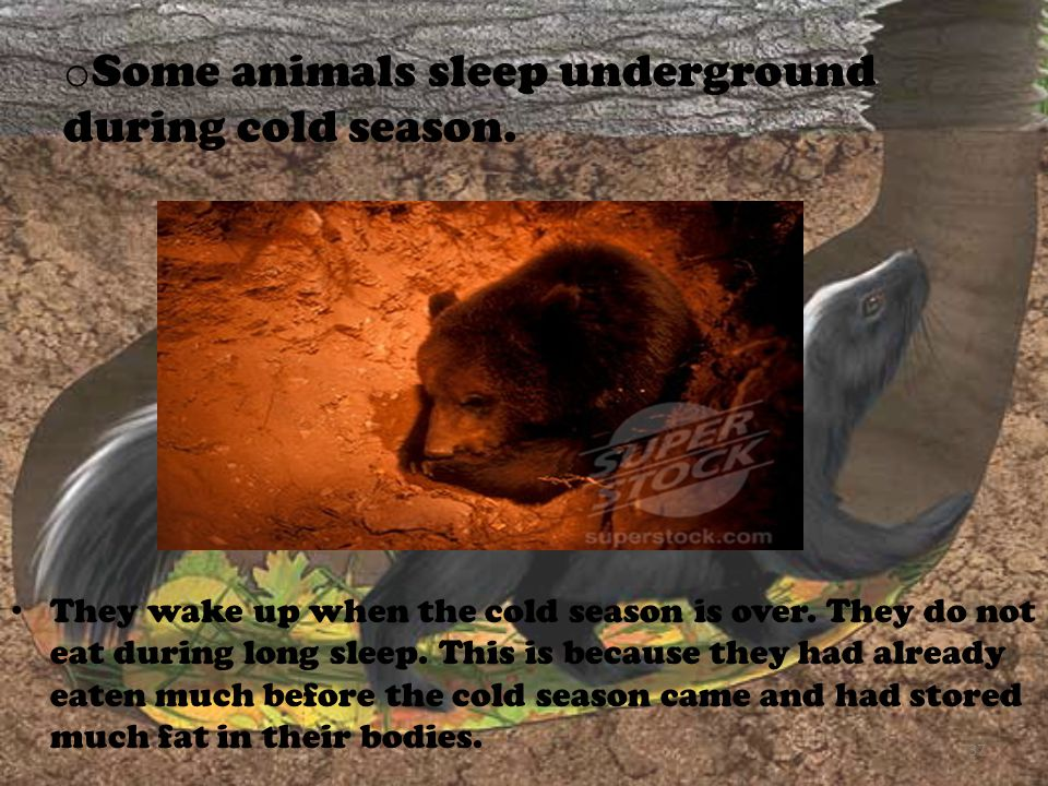 Some animals sleep underground during cold season.
