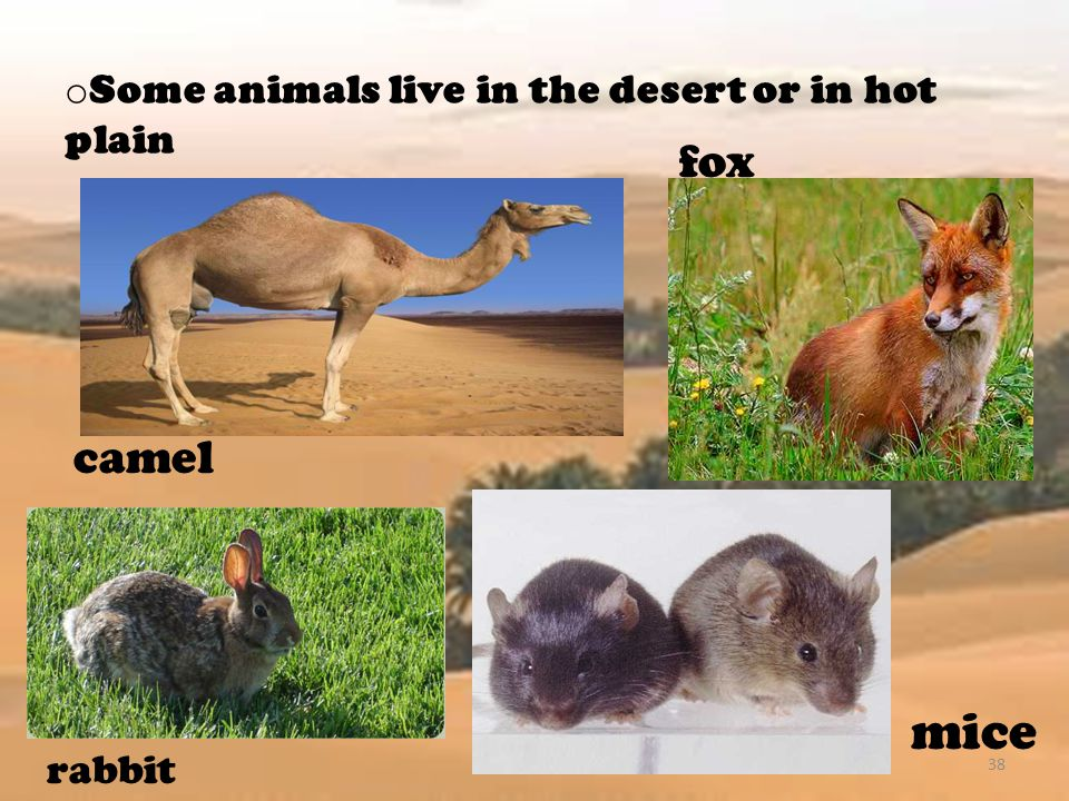 Some animals live in the desert or in hot plain