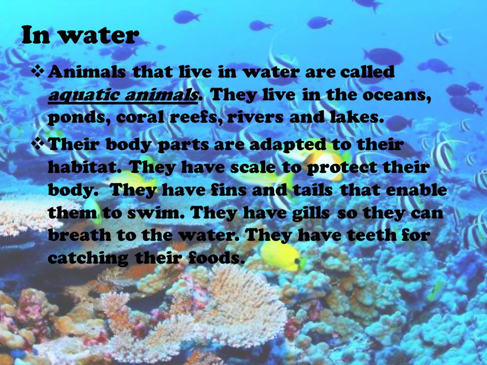 In water Animals that live in water are called aquatic animals. They live in the oceans, ponds, coral reefs, rivers and lakes.