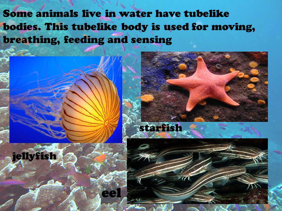 Some animals live in water have tubelike bodies