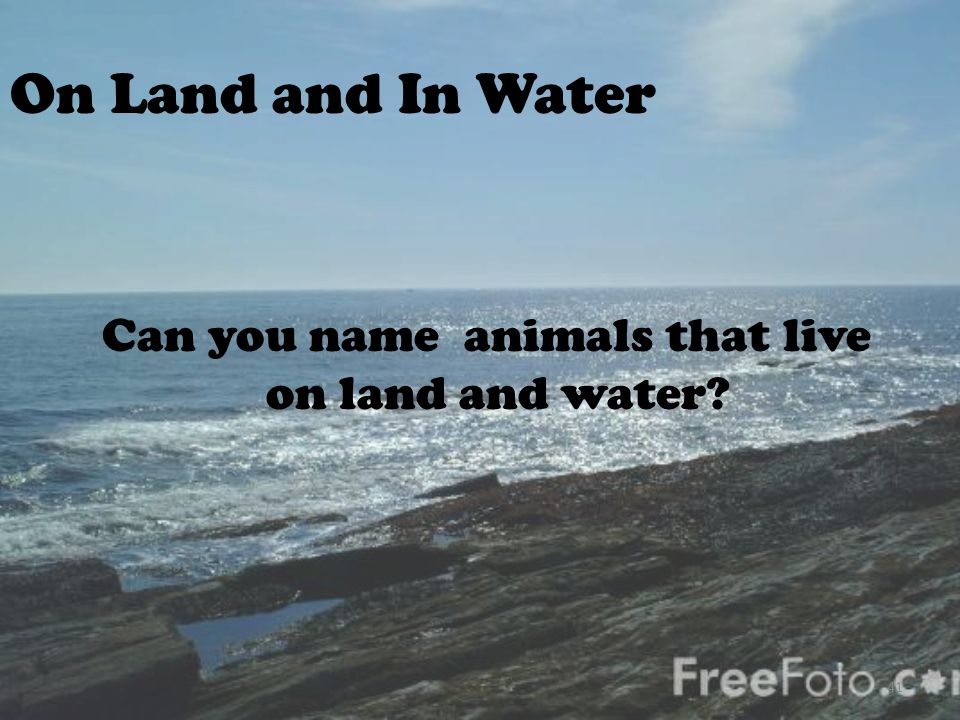 Can you name animals that live on land and water