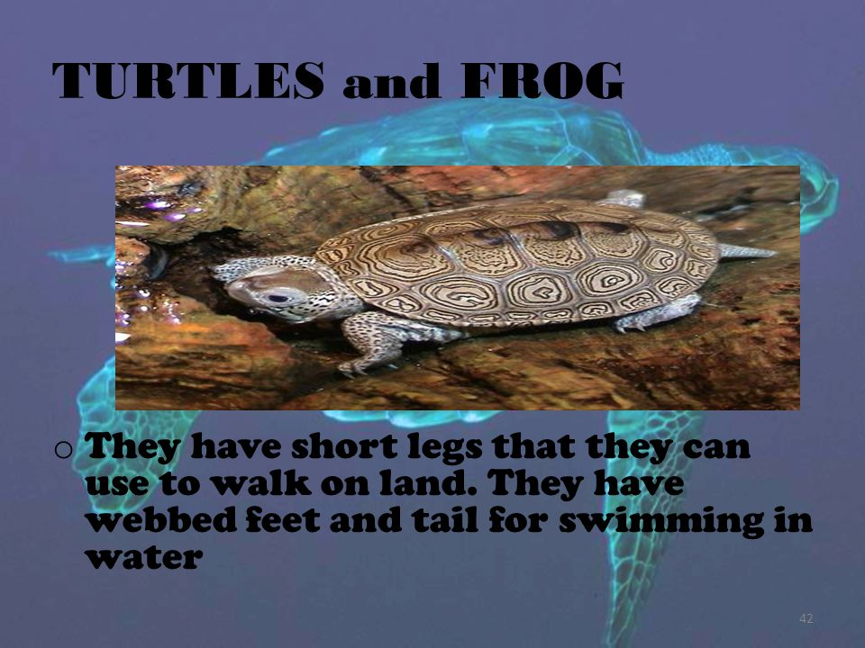 TURTLES and FROG They have short legs that they can use to walk on land.