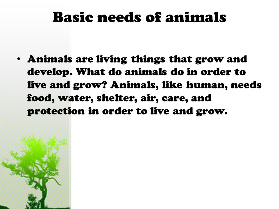 Basic needs of animals