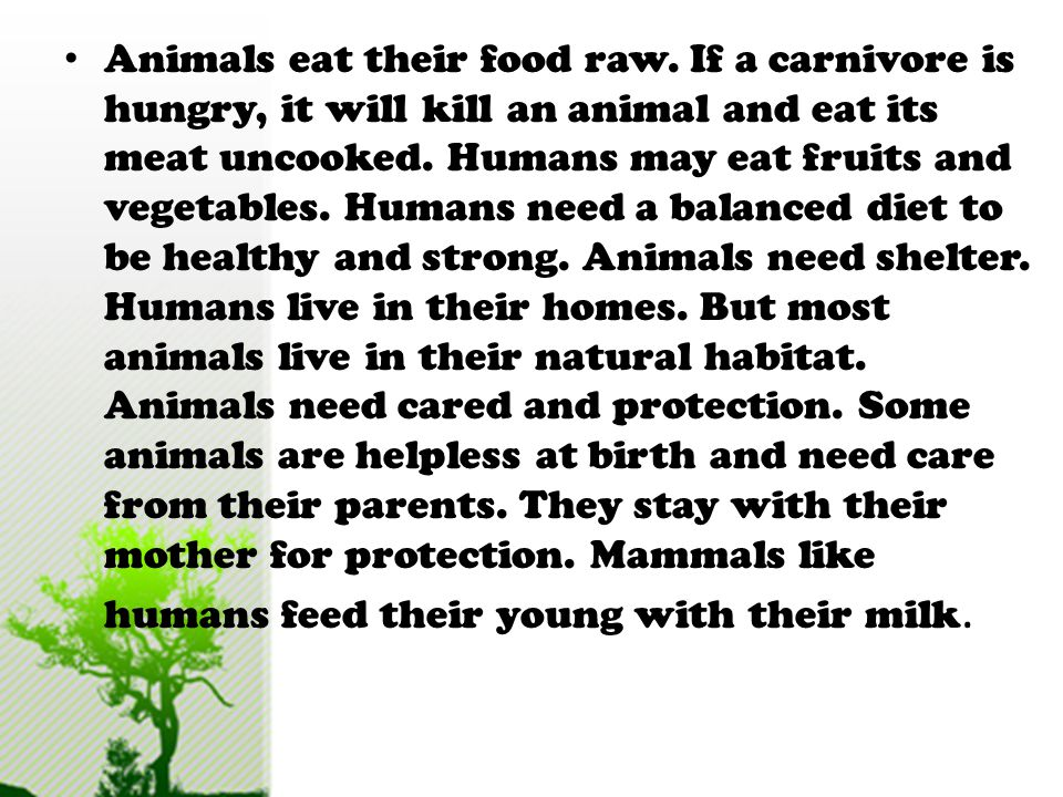 Animals eat their food raw