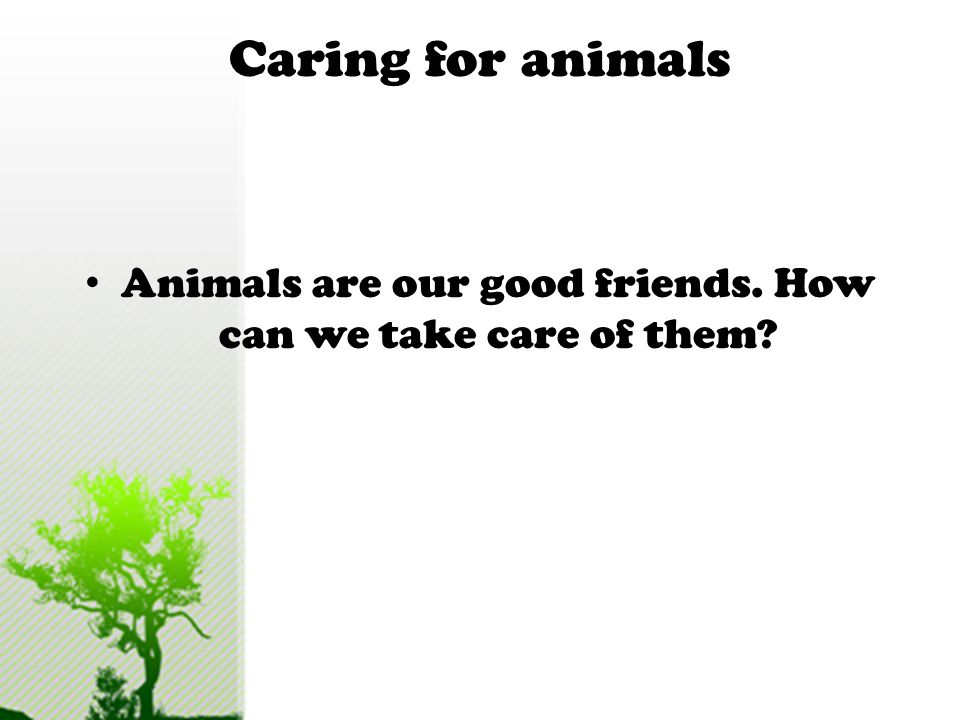 Animals are our good friends. How can we take care of them