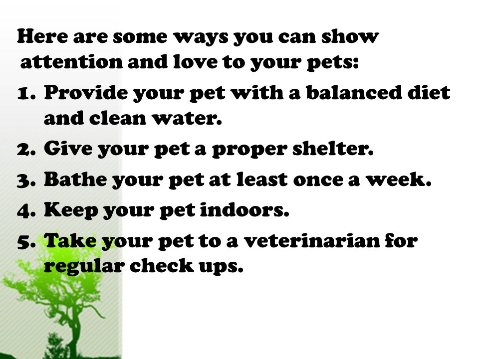 Here are some ways you can show attention and love to your pets: