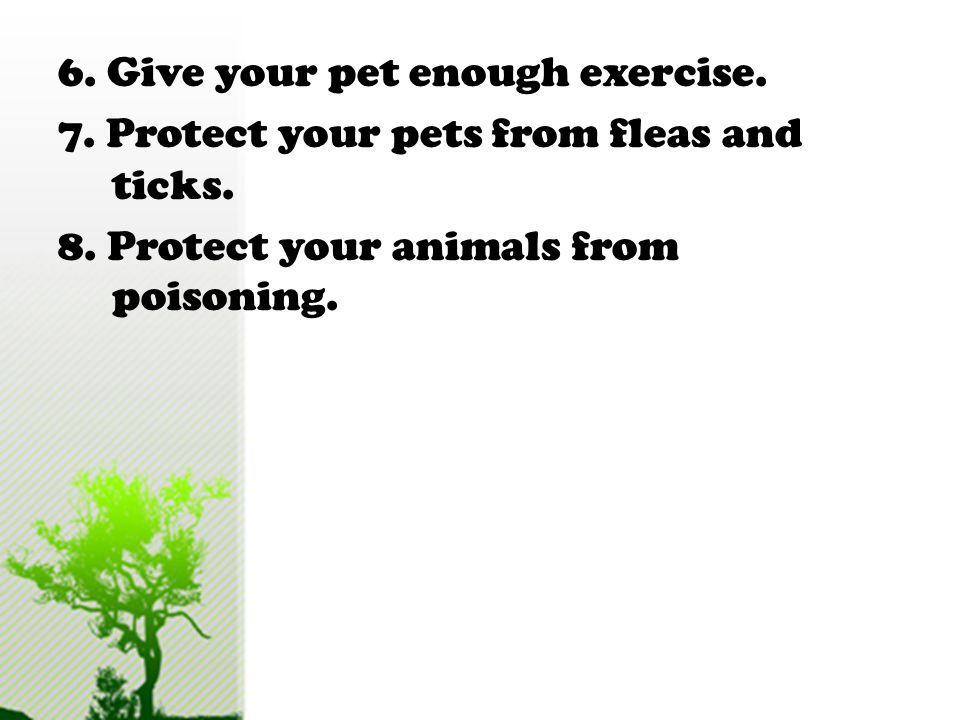 6. Give your pet enough exercise. 7