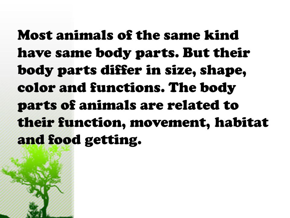 Body Parts Of Animals Used For Getting Food Ppt