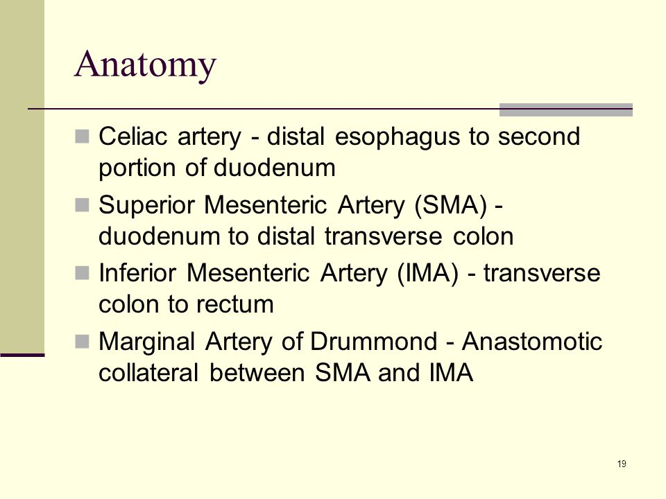 Anatomy Celiac artery - distal esophagus to second portion of duodenum