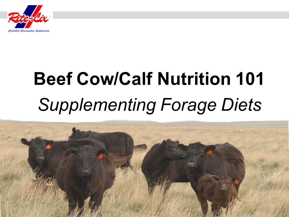 Beef Cow/Calf Nutrition 101