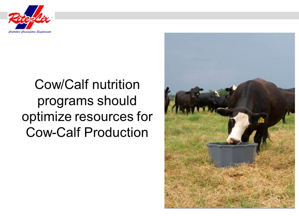Cow/Calf nutrition programs should optimize resources for Cow-Calf Production
