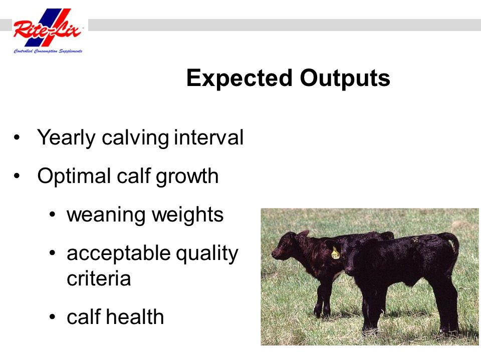 Expected Outputs Yearly calving interval Optimal calf growth