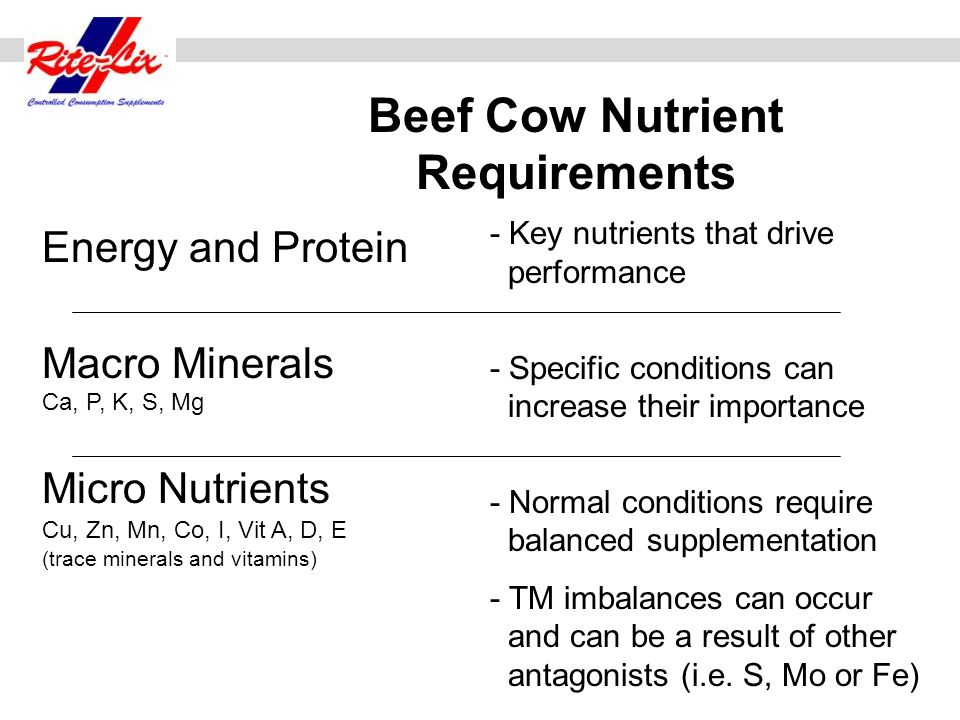 Beef Cow Nutrient Requirements