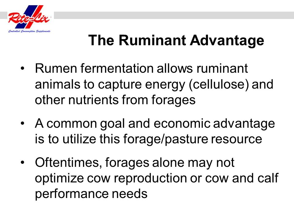 The Ruminant Advantage