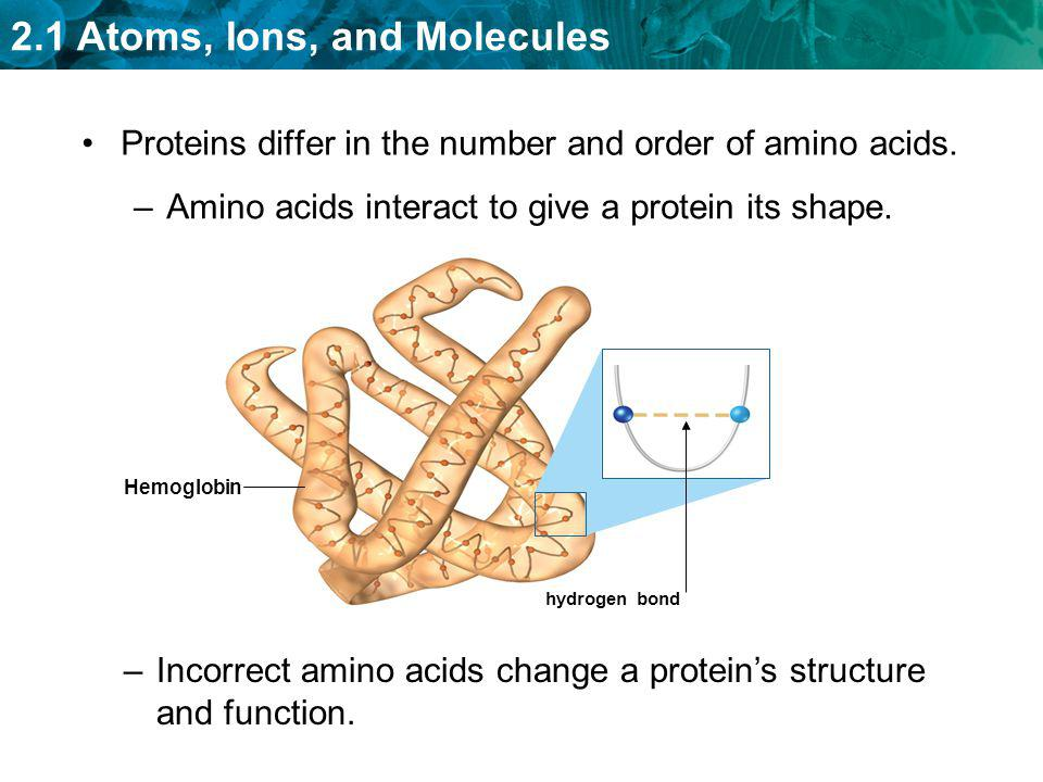 Proteins differ in the number and order of amino acids.