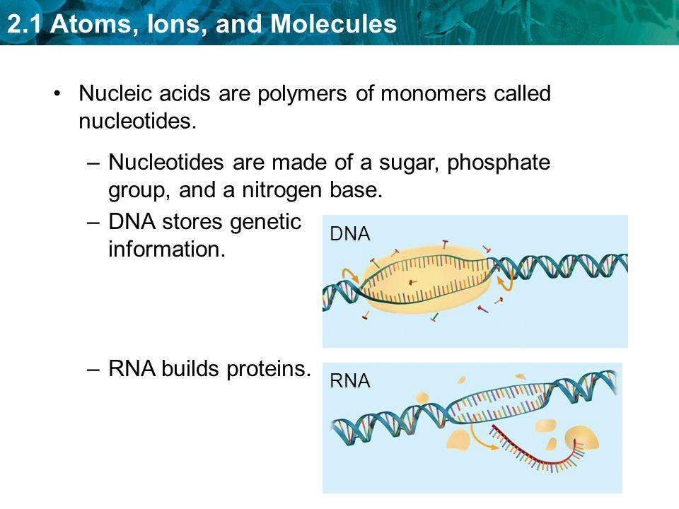 Nucleic acids are polymers of monomers called nucleotides.