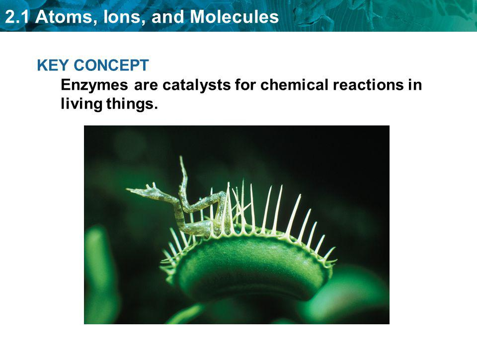 KEY CONCEPT Enzymes are catalysts for chemical reactions in living things.