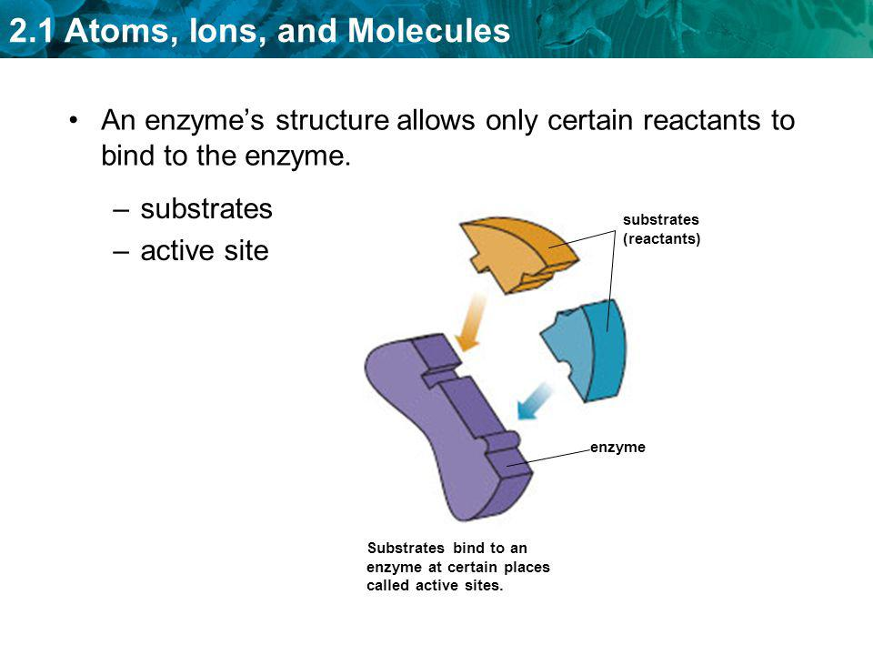 An enzyme's structure allows only certain reactants to bind to the enzyme.